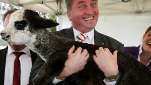 "Deputy P.M Barnaby Joyce, "" acting the goat"". demonstrates prowess as bush vet, also adept at doctoring Hansard."