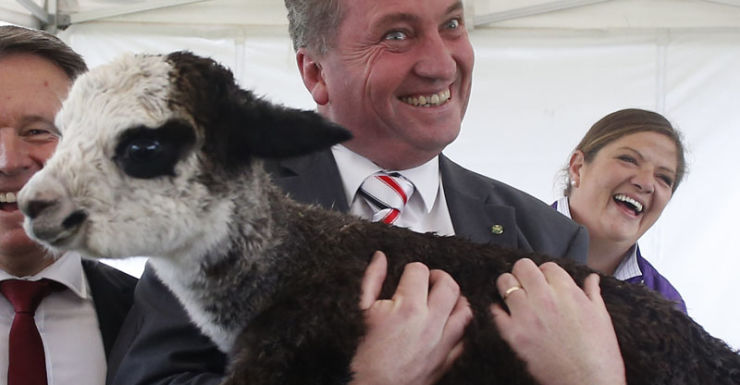 Federal Minister for Agriculture Barnaby Joyce (right) and Federal Labor MP Joel Fitzgibbon pose for pictures with Peruvian alpacas in front of the Parliament House in Canberra, Thursday, March 27, 2014. (AAP Image/Daniel Munoz) NO ARCHIVING